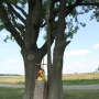 Jadeszki - 2 krzyże przydrożne w objęciach drzew