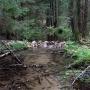 Leśna struga Średnia płynie w pobliżu miejsca rozegrania się Bitwy pod Waliłami.