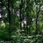 Park podworski de Virionów