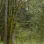 Niespotykana forma drzewa z wieloma pniami to znak że jesteśmy w pobliżu miejsca mocy.