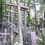 Las krzyży na Grabarce.