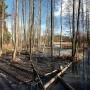 Przedwiośnie 2014 roku odkryło nowe miejsce działalności bobrów. Leśne jeziorko na razie nie jest bardzo duże ale niedługo może krajobraz jeszcze bardziej zmienić się.