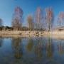 Strumień płynący obok widocznego młyna wodnego wpływa do malowniczego stawu zlokalizowanego na obrzeżu Muzeum Wsi (tuz za bimbrownią).