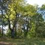 Park dworski i nieistniejący już jesion.