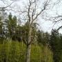 Szlak Dębów Królewskich i Wielkich Książąt Litewskich
