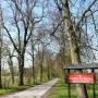 Do pałacu Górskich prowadzi piękna aleja pomnikowych drzew.