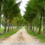 Droga na cmentarz muzułmański obsadzona modrzewiami jest wyjątkowo malownicza.