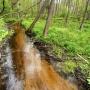 Rzeczka Starzynka płynąca przez rezerwat w kierunku rzeki Supraśl.