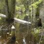 Pływający gruby pień świerka to również sprawka okolicznych bobrów.