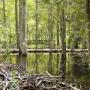 Nagromadzone gałęzie ułożone w stos to nic innego jak żeremie bobrów. To widoczne na zdjęciu jest juz opuszczone, ale nieopodal można spotkać inne znacznie większe.