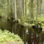 Malownicza rzeczka Starzynka płynąca wzdłuż rezerwatu