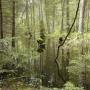 Idąc w górę leśnej rzeczki Starzynki można dotrzeć do wyjątkowo dużego żeremia bobrów. Teren jest tu jednak trudno dostępny a las coraz gęstszy.