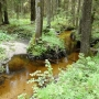 Rezerwat 'Kulikówka' - Zalesie