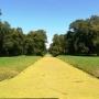 Widok od strony pałacu na wyspie w stronę parku.