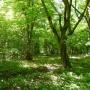 Chodząc po gęstym zarośniętym parku można odnaleźć dawne ścieżki, obsadzone szpalerami drzew.