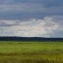 Łąki nad Narwią
