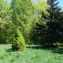 Jarczew - zabytkowy park