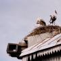 Zabiele - gniazdo bocianie na dachu wiatraka holendra