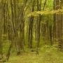Rezerwat przyrody 'Las Zwierzyniecki'