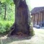 Park przed Muzeum przyrodniczo-leśnym