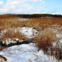 Do widocznego tu żeremia bobrów można zimą dojść suchą stopą po zamarzniętym bagnie.
