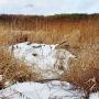 Żeremie bobrów leży tuż nad rzeką.