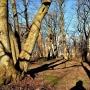 Park Plebański obecnie nie wygląda zbyt atrakcyjnie, ale niedługo, po przeprowadzonej rewitalizacji odzyska dawną świetność.