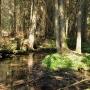 Przez rezerwat Woronicza płynie rzeczka o tej samej nazwie, malowniczo omijając wysokie świerki.