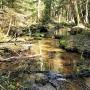 Rezerwat przyrody ' Woronicza' - Woronicze