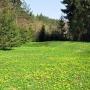 Arboretum wiosną.