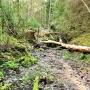 Tutaj zaczyna swój bieg leśny strumień.