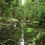 To już nie jest wąski strumień ale sporej wielkości leśne jeziorko stworzone przez bobry.