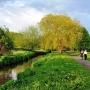 Po dwudziestu dniach ta sama okolica nad rzeką, ubrana jest w piękny zielony kolor.
