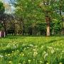 Park Antoniuk