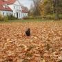Jesień w Strabli