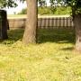 Dobryń Duży - Cmentarz pierwszowojenny