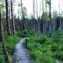 Rezerwat Krzemianka - Rybniki