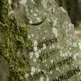 Mizar- cmentarz muzułmański