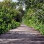 W sierpniu zieleń wokół kładki jest wyjątkowo bujna. Podmokłe tereny i słońce to doskonała pożywka dla roślin, które najchętniej pochłonęłyby drewniany pomost. Pracownicy Parku jednak czuwają nad porządkiem i przycinają zagradzające gałęzie.