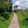 Wieża widokowa na końcu trasy to świetne miejsce do odpoczynku i obserwacji biebrzańskiej przyrody.