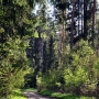 Leśne Wędrownice