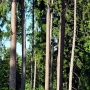 Rezerwat przyrody 'Karczmisko'