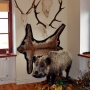W rogu salki przystanął dzik a na ścianie rozłożył ryś. Swoje poroże pozostawiły tu jelenie oraz żubr, których w Puszczy Knyszyńskiej jest około 70 sztuk.