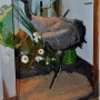 Żuraw eksponowany w pomieszczeniach