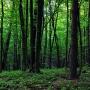 Miejsce po dawnej kopalni skutecznie zamaskował gęsty las, strzegąc przez tysiąclecia tego cennego miejsca z okresu neolitu.