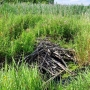 To samo żeremie latem - opuszczone przez właścicieli. Wygląda na to że bobry znalazły inne miejsce na swoje gospodarstwo.