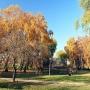 Park Antoniuk w jesiennych kolorach.
