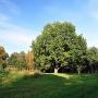 Olbrzymi pomnikowy dąb i okoliczne drzewa to pozostałości parku krajobrazowego z XIX w.