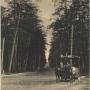 Tramwaj konny wyjeżdżający z lasu Zwierzynieckiego w ulicę Świętojańską o czym powiadamia napis nad motorniczym- LAS. Pocztówka z ok. 1908 roku ze zbiorów J. Murawiejskiego.