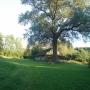 Ludomirowo krajobraz z drzewem i stodołą